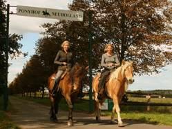 Bild Ponyhof Neuholland