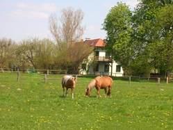 Bild 4 Ponyhof Neuholland