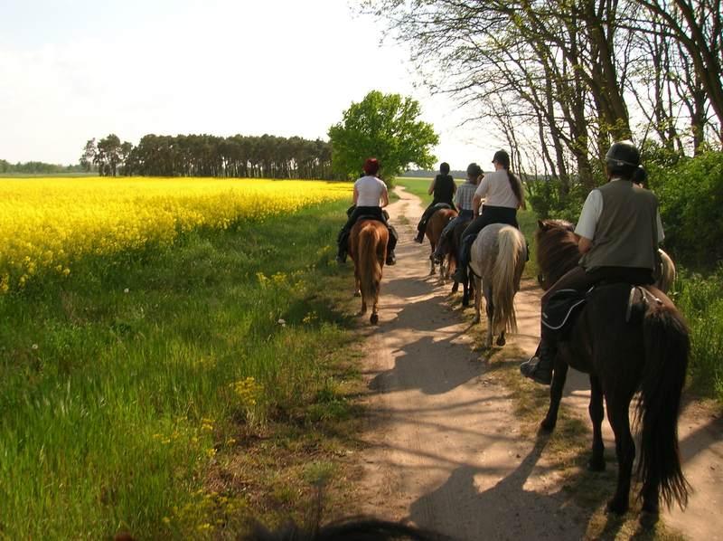 Bild 5 Reiter- und Erlebnisbauernhof Groß Briesen