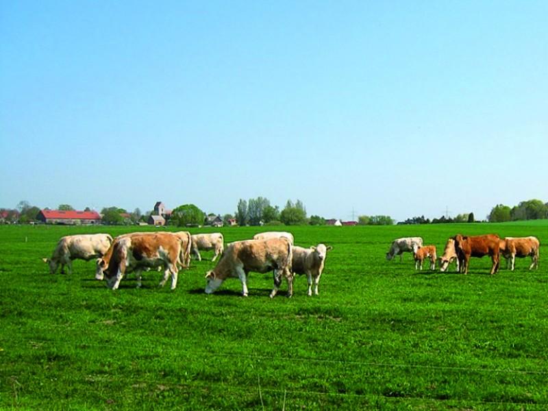 Bild 1 Agrar GmbH Bergsdorf