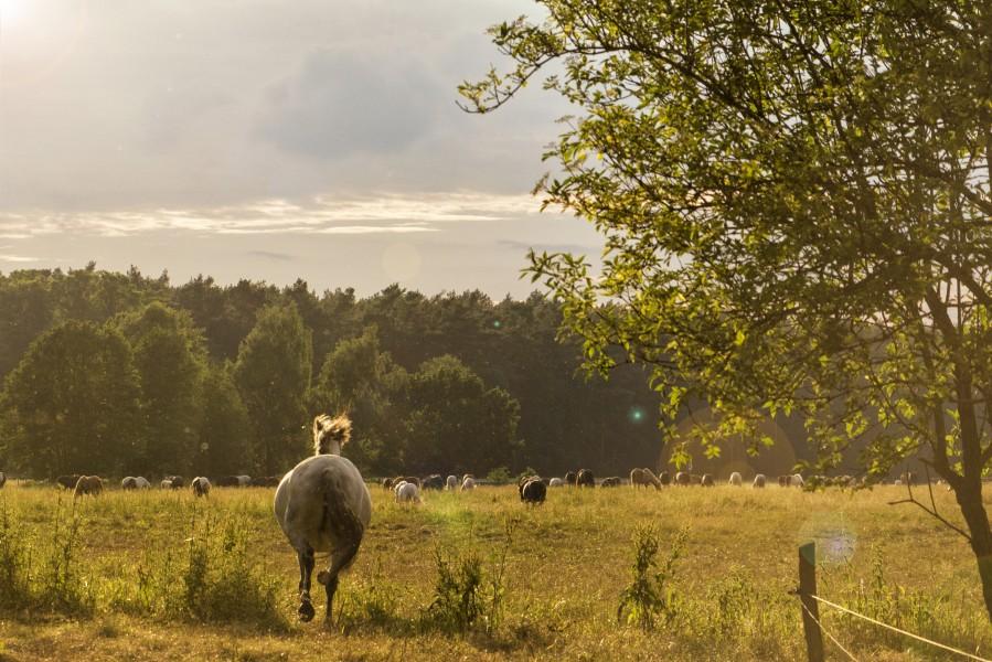 Bild 4 Reiter- und Erlebnisbauernhof Groß Briesen