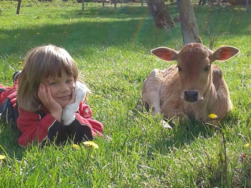 Bild 0 Landwirtschaft umd Urlaub auf dem Bauernhof - Birkenhof