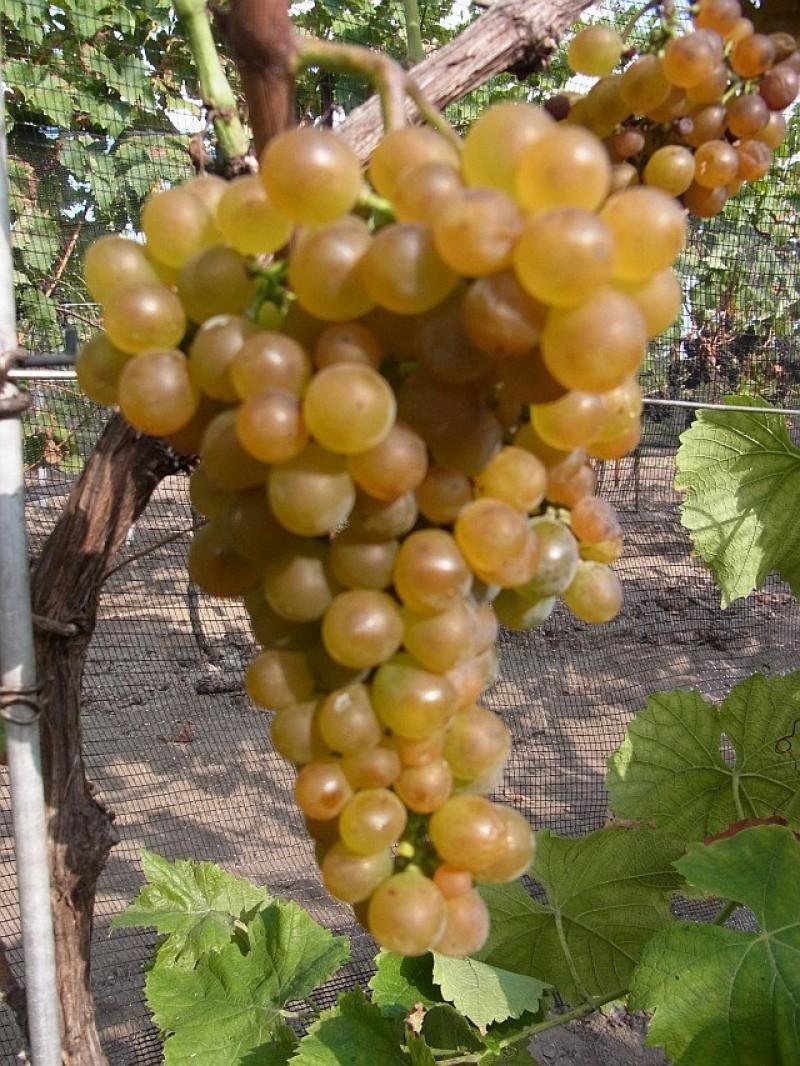 Bild 3 Weingut Schurig