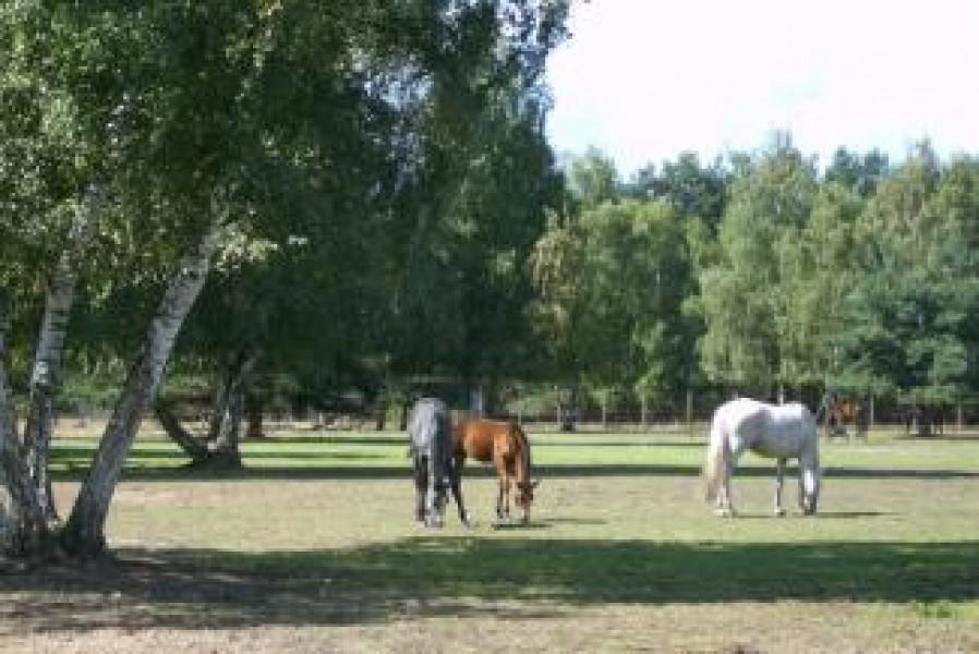 Bild 0 Pferdezuchtbetrieb und Freizeitanlage