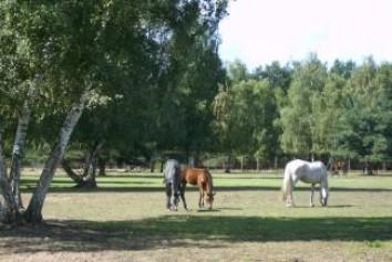 Bild Pferdezuchtbetrieb und Freizeitanlage