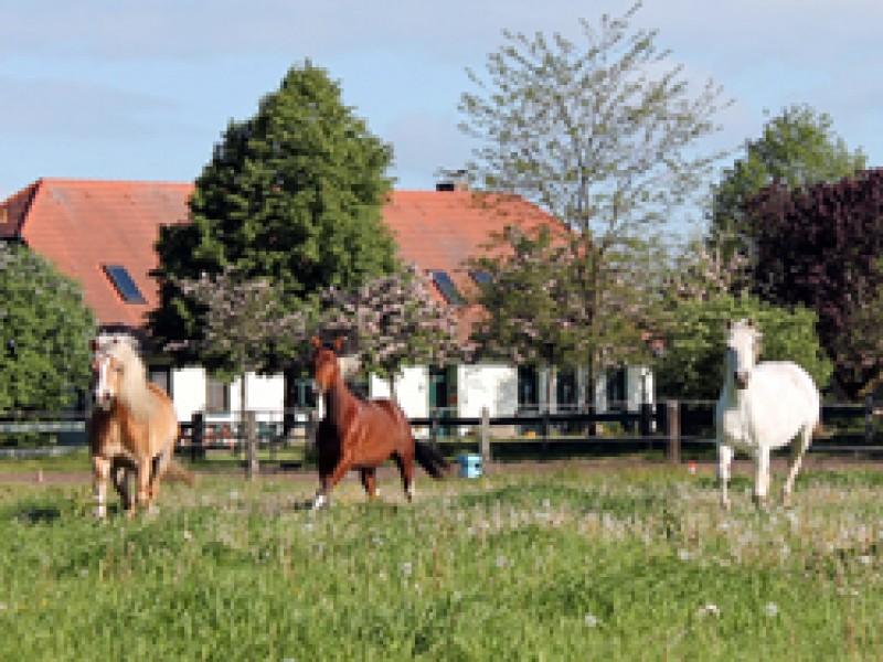 Bild 0 Ponyhof Neuholland
