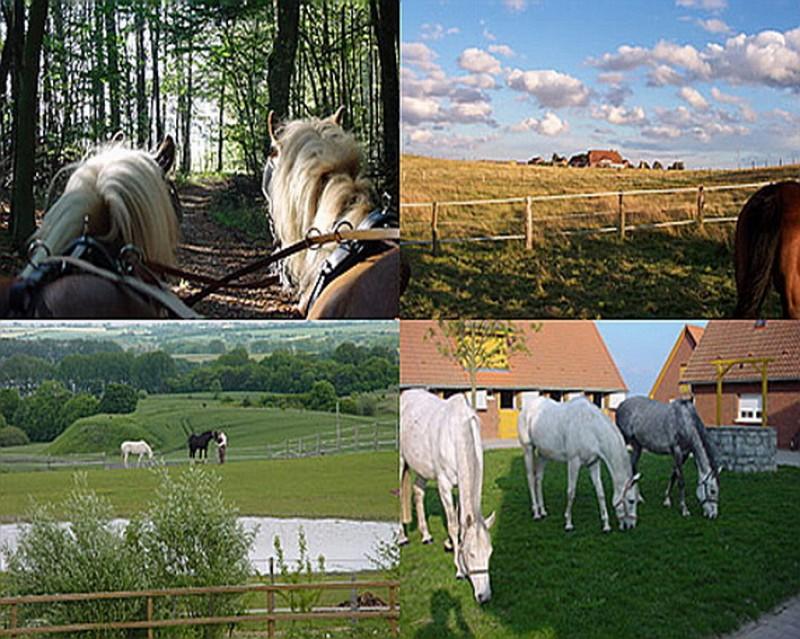 Bild 1 Pferdehof Ruhnau