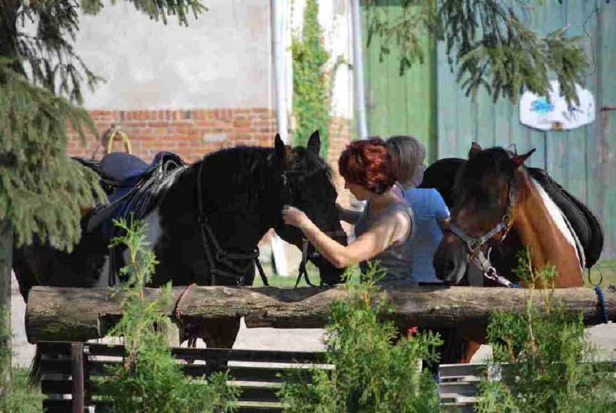 Bild 3 Ferien- und Pferdehof Schörfke