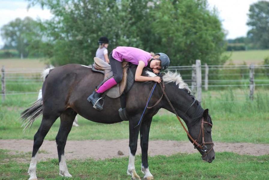 Bild 1 Ferien- und Pferdehof Schörfke