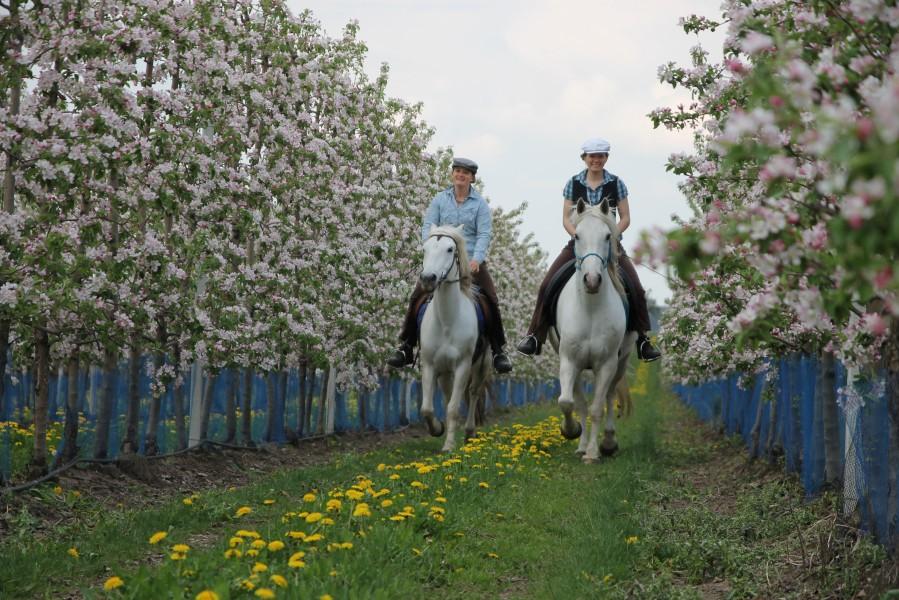 Bild 4 Camargue-Pferde-Hof / Fruveg GmbH