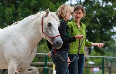 Bild Pferdemomente