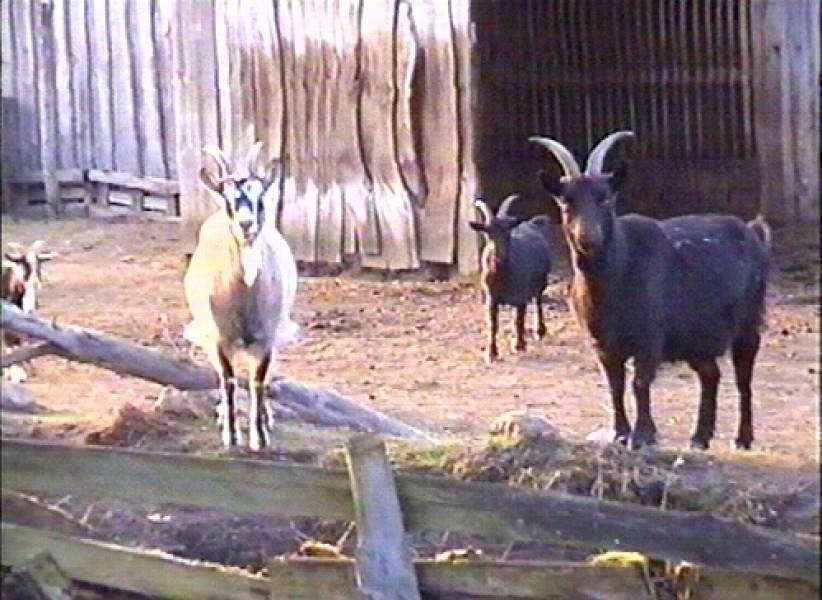 Bild 2 Urlaub auf dem Bauernhof der Eulenmühle