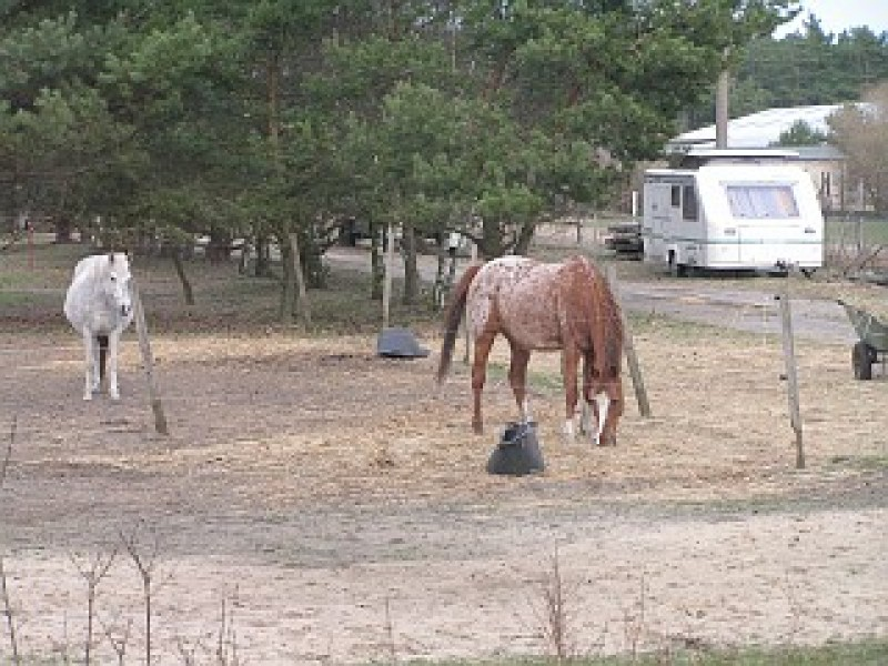 Bild 1 Pferdezuchtbetrieb und Freizeitanlage