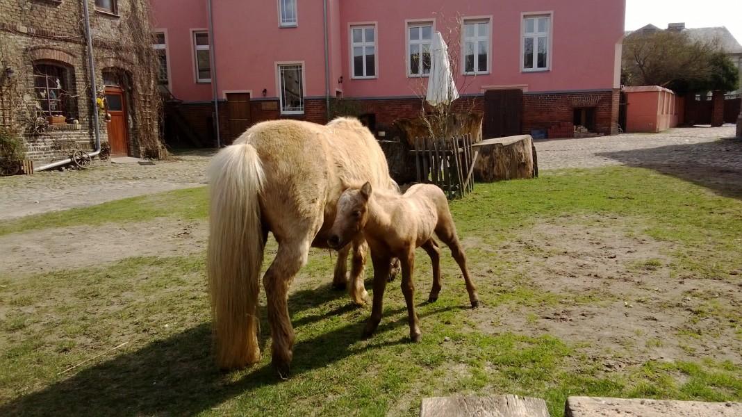 Bild 2 Pferdehof Bialek