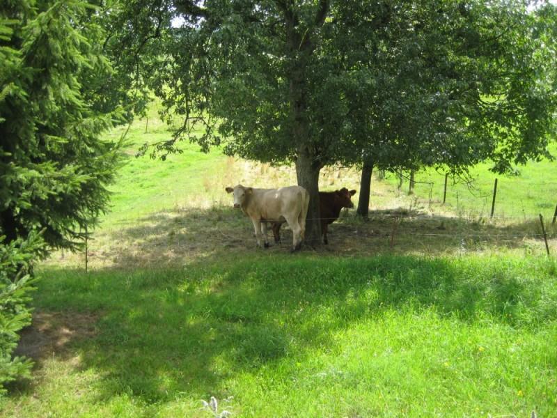 Bild 3 Bauernhof Zahn