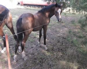 Bild Pferdezuchtbetrieb Zum Faulen Hund