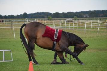Bild Pferdepension Schumacher