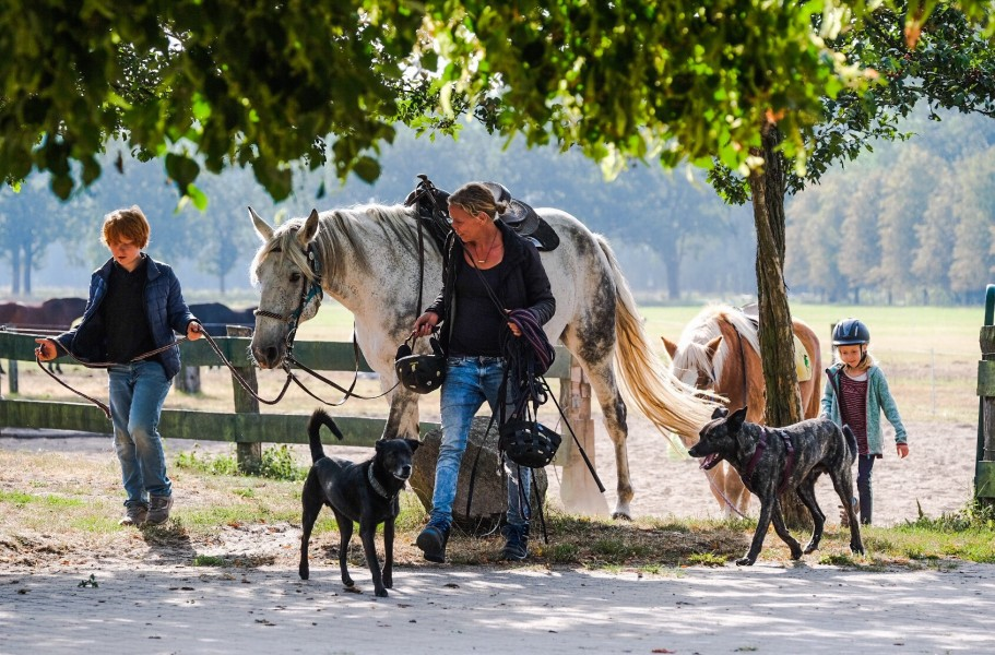 Bild 1 Ponyhof Neuholland