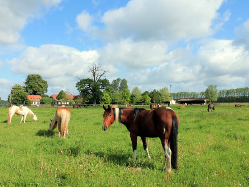 Bild 3 Ponyhof Neuholland