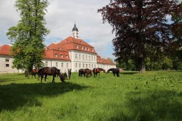 Bild Brandenburgisches Haupt- und Landgestüt