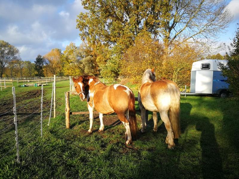 Bild 1 Pferdefreunde Dahmetal