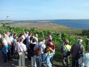 Bild WeinWobar vom Großräschener See
