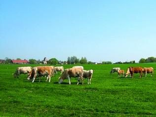 Bild Agrar GmbH Bergsdorf