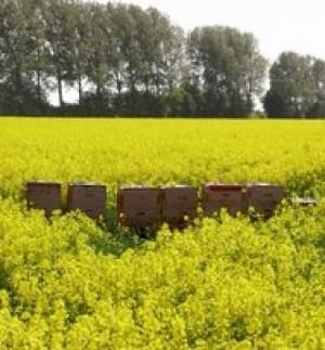 Bild Imkerei Maaß mit Bienensommerakademie